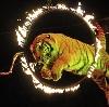 Цирки в Бердске