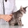 Ветеринарные клиники в Бердске